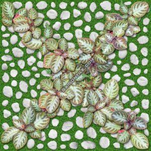 Gạch hoa cỏ lát sân vườn xanh lá Đồng Tâm 40x40 4040GREENERY004