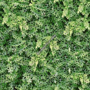 Gạch thiên nhiên cây cỏ sân vườn Đồng Tâm 40x40 4040GREENERY001