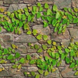 Gạch lát nền sân vườn 300x600 Đồng Tâm greenery 3060GREENERY004