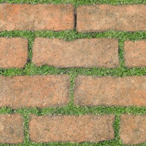 Gạch lát nền sân vườn 300x600 Đồng Tâm greenery 3060GREENERY008